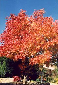 Arborists Pilot Point Tx Tree Source Inc